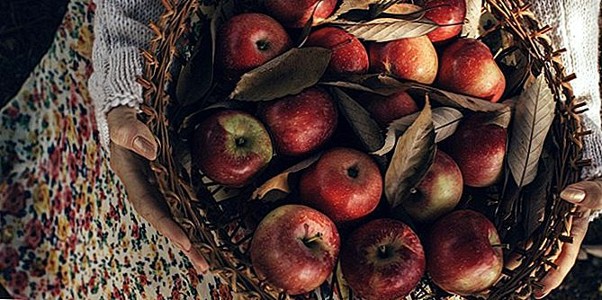 Gone Apple Picking? Proovige neid Falli Retsepteese